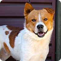 Adopt A Pet :: Huell Howser - Los Angeles, CA