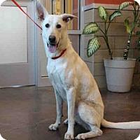Adopt A Pet :: JASMINE - Norman, OK