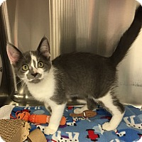 Adopt A Pet :: Ricky - Battle Creek, MI