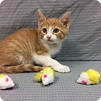 Adopt A Pet :: Shock - Moody, AL