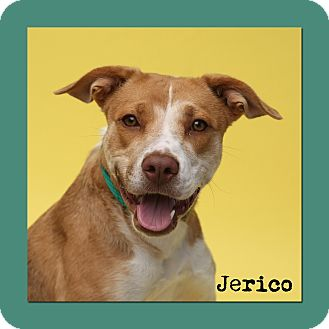 Retriever (Unknown Type) Mix Dog for adoption in Aiken, South Carolina - Jerico