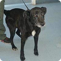 Adopt A Pet :: Hazel - Summerville, SC