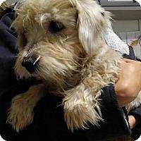 Adopt A Pet :: Betty - Big Spring, TX