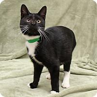 Adopt A Pet :: VJ - McCormick, SC
