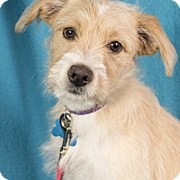 Adopt A Pet :: Karina - Minneapolis, MN