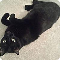 Adopt A Pet :: Oswald - Atlanta, GA