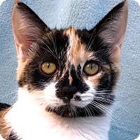 Adopt A Pet :: Ariel - La Jolla, CA