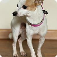 Adopt A Pet :: Max - Princeton, MN