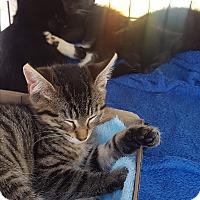 Adopt A Pet :: Bonnie - Roscoe, NY
