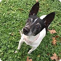 Adopt A Pet :: Lacey - Joplin, MO