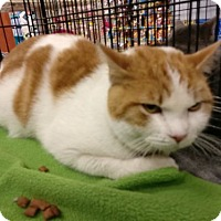Adopt A Pet :: Oswald - Avon, OH
