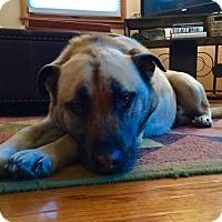 Adopt A Pet :: Gabe - Minneapolis, MN
