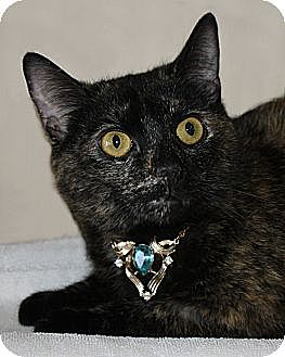 Domestic Shorthair Cat for adoption in Rochester, New York - Liz Taylor