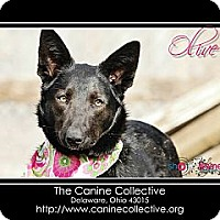 Adopt A Pet :: Olive - Delaware, OH