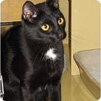Adopt A Pet :: Junior - Modesto, CA