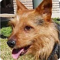 Adopt A Pet :: Alvin - Kingwood, TX