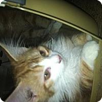 Adopt A Pet :: Poptart - Clay, NY