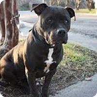 Adopt A Pet :: Brenda - Justin, TX
