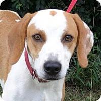 Adopt A Pet :: *Max - PENDING - Westport, CT