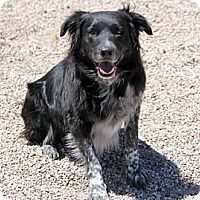 Adopt A Pet :: Austin - Cedar City, UT