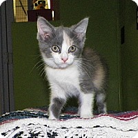 Adopt A Pet :: Rachel - Dover, OH