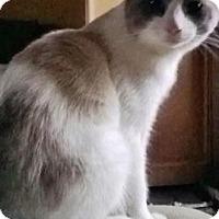 Adopt A Pet :: Tipper - East Hanover, NJ