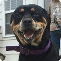 Adopt A Pet :: Dreyfus - Frederick, PA