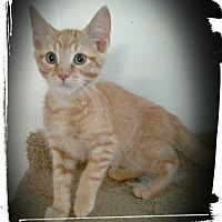 Adopt A Pet :: Hunter - Richmond, VA
