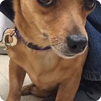 Adopt A Pet :: Tia - Fort Collins, CO