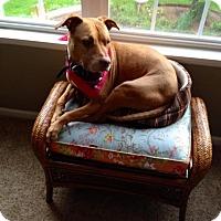 Adopt A Pet :: Bella - Richfield, WI
