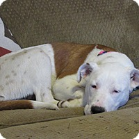 Adopt A Pet :: Jolene - Broken Arrow, OK