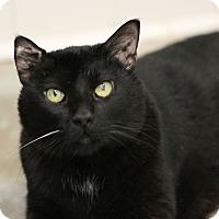 Adopt A Pet :: Thomas akaTomasina - Canoga Park, CA