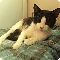Adopt A Pet :: Rowan 2 - Leonardtown, MD