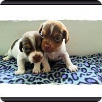 Adopt A Pet :: Clay Jr. - Genoa City, WI
