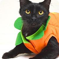 Adopt A Pet :: Watson - Dublin, CA