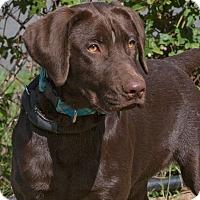 Adopt A Pet :: Bruno - Elmwood Park, NJ
