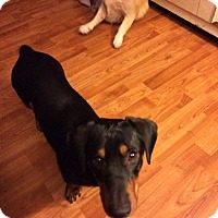 Adopt A Pet :: Romeo - St. Catharines, ON