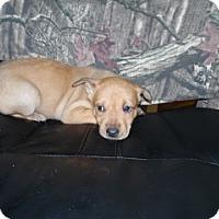 Adopt A Pet :: Demi - Clarksville, AR