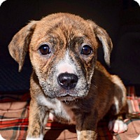 Adopt A Pet :: Tulip - Seabrook, NH