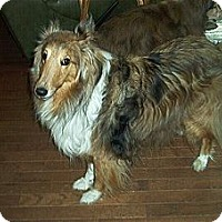 Adopt A Pet :: Sugar Bear - Alderson, WV