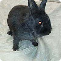 Adopt A Pet :: Charlie - Conshohocken, PA