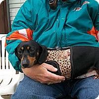 Adopt A Pet :: Hope - West Bloomfield, MI