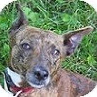 Adopt A Pet :: Midge - Hamilton, ON