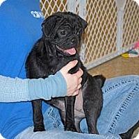 Adopt A Pet :: Katie - Minneola, FL