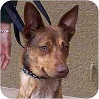 Adopt A Pet :: Kenji - Las Vegas, NV
