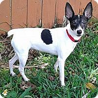 Adopt A Pet :: Marcia - Jacksonville, FL