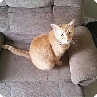 Adopt A Pet :: Ace - Troy, OH
