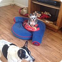 Adopt A Pet :: Possum - Milton, FL