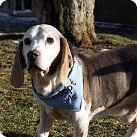 Adopt A Pet :: Gator - Novi, MI