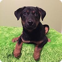 Adopt A Pet :: Loretta - Russellville, KY